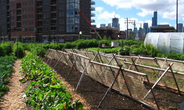 """""""Agricoltura è"""", La voglia di tornare alla campagna per evadere della monotonia urbana."""
