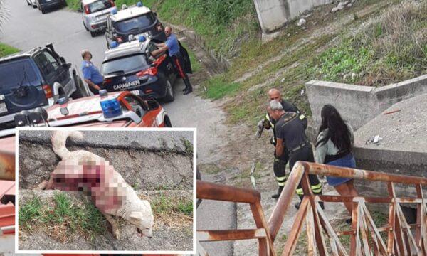 Simeri Crichi, Cane gravemente ferito da colpi d'arma da fuoco. Carabinieri sul posto